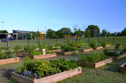 community garden at the Pavilion